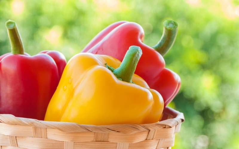 Fun Facts About Greenhouse Peppers